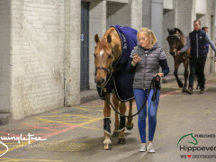 CAI W London GBR 2018   Horseinspection  10