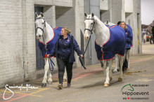 CAI W London GBR 2018   Horseinspection  14