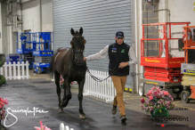 CAI W London GBR 2018   Horseinspection  16