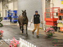 CAI W London GBR 2018   Horseinspection  19