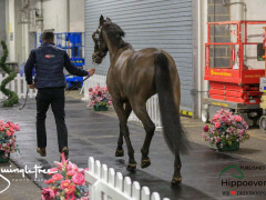 CAI W London GBR 2018   Horseinspection  21