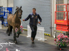 CAI W London GBR 2018   Horseinspection  23