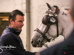 CAI W London GBR 2018   Horseinspection  24
