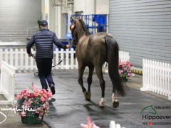 CAI W London GBR 2018   Horseinspection  29