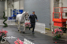 CAI W London GBR 2018   Horseinspection  30