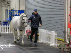 CAI W London GBR 2018   Horseinspection  33