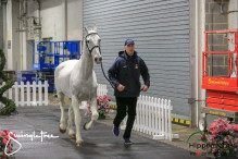 CAI W London GBR 2018   Horseinspection  37