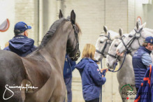 CAI W London GBR 2018   Horseinspection  39