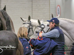 CAI W London GBR 2018   Horseinspection  40