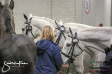 CAI W London GBR 2018   Horseinspection  41