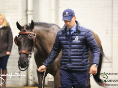CAI W London GBR 2018   Horseinspection  42