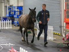 CAI W London GBR 2018   Horseinspection  44
