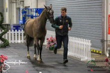 CAI W London GBR 2018   Horseinspection  46