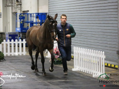 CAI W London GBR 2018   Horseinspection  47