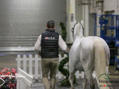 CAI W London GBR 2018   Horseinspection  50