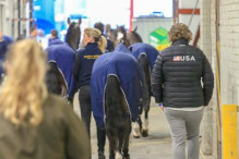 CAI W London GBR 2018   Horseinspection  8