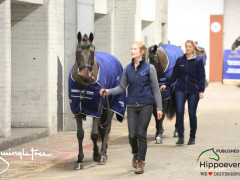 CAI W London GBR 2018   Horseinspection  9