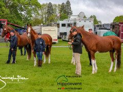 RWHS CHIO Horseinspection  13