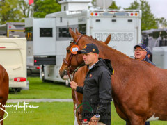 RWHS CHIO Horseinspection  14