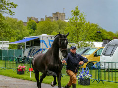 RWHS CHIO Horseinspection  27