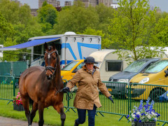 RWHS CHIO Horseinspection  31