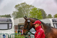 RWHS CHIO Horseinspection  40