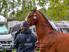 RWHS CHIO Horseinspection  9
