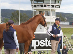 a Nordic Baltic Championships 2019   HORSEINSPECTION  14