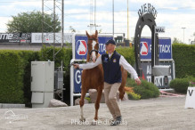 a Nordic Baltic Championships 2019   HORSEINSPECTION  16