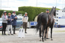 a Nordic Baltic Championships 2019   HORSEINSPECTION  19
