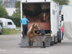 a Nordic Baltic Championships 2019   HORSEINSPECTION  4
