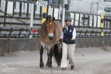 a Nordic Baltic Championships 2019   HORSEINSPECTION  7